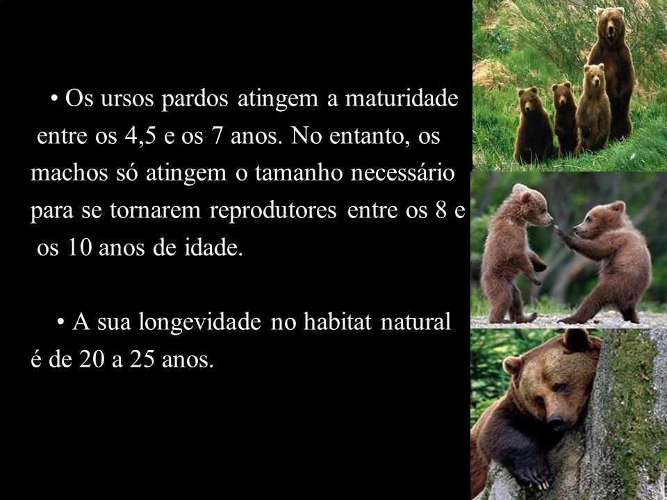 Os ursos pardos atingem a maturidade entre os 4,5 e os 7 anos. No entanto, os machos só atingem o tamanho necessário para se tornarem reprodutores ent