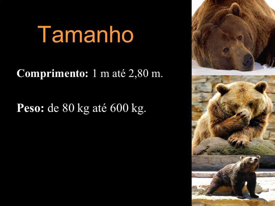 Tamanho Comprimento: 1 m até 2,80 m. Peso: de 80 kg até 600 kg.