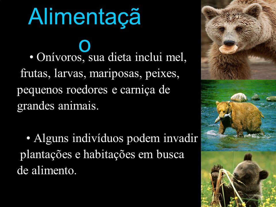 Alimentaçã o Onívoros, sua dieta inclui mel, frutas, larvas, mariposas, peixes, pequenos roedores e carniça de grandes animais. Alguns indivíduos pode