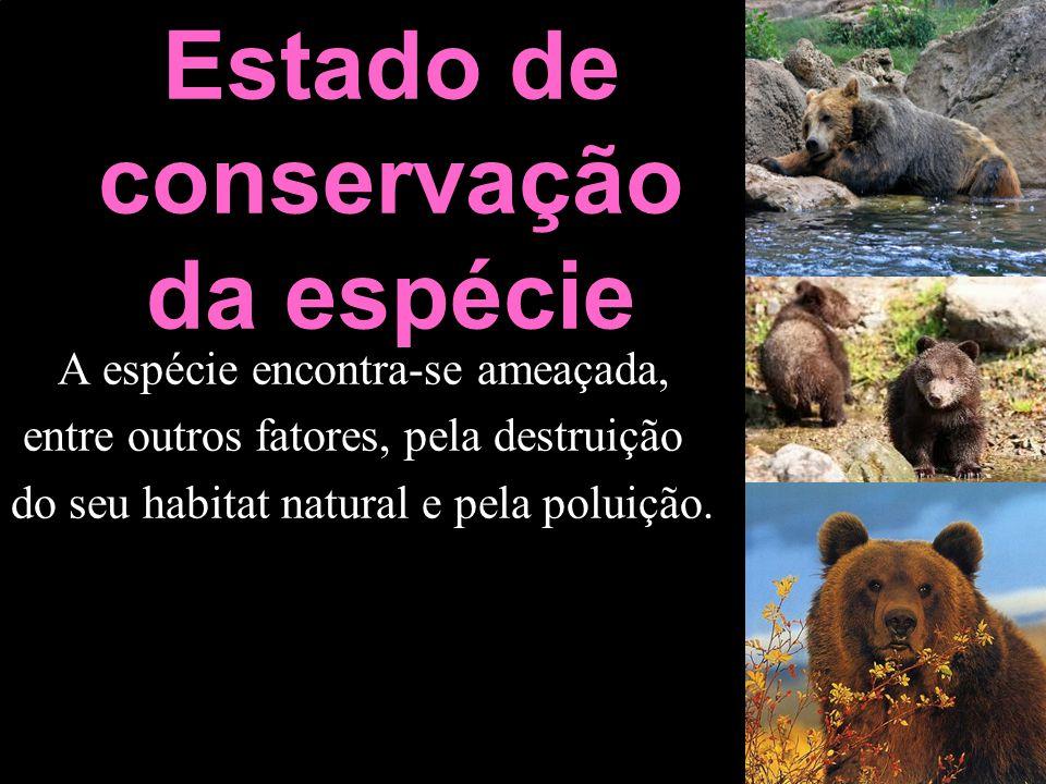 Estado de conservação da espécie A espécie encontra-se ameaçada, entre outros fatores, pela destruição do seu habitat natural e pela poluição.