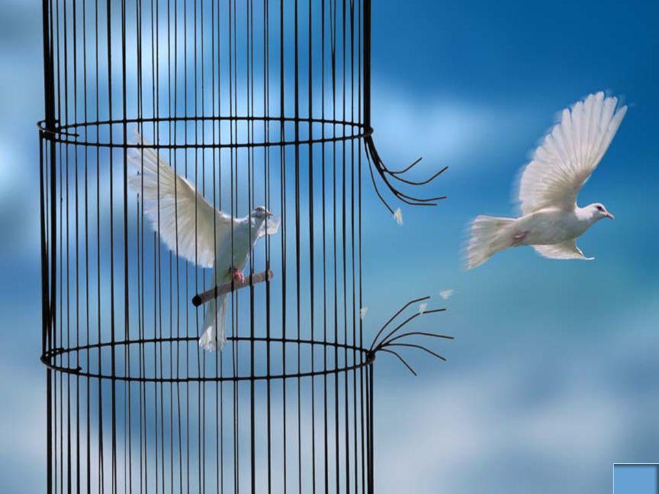 Coração da Paz TODA NOSSA AÇÃO CONTA UMA HISTÓRIA www.pazcury.com.br – (31) 9301.0950 114