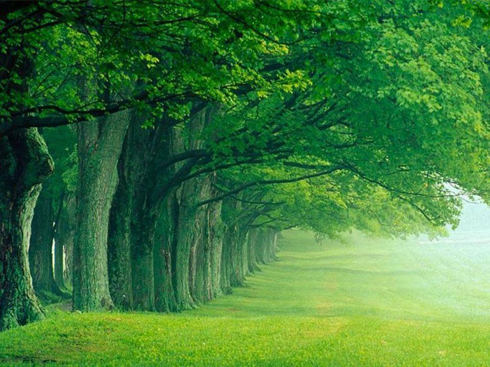 Coração da Paz jpazcury@globo.com - (31) 9976.1498 24 não colhe se não tiver plantado.