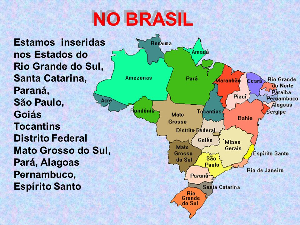NO BRASIL Estamos inseridas nos Estados do Rio Grande do Sul, Santa Catarina, Paraná, São Paulo, Goiás Tocantins Distrito Federal Mato Grosso do Sul,