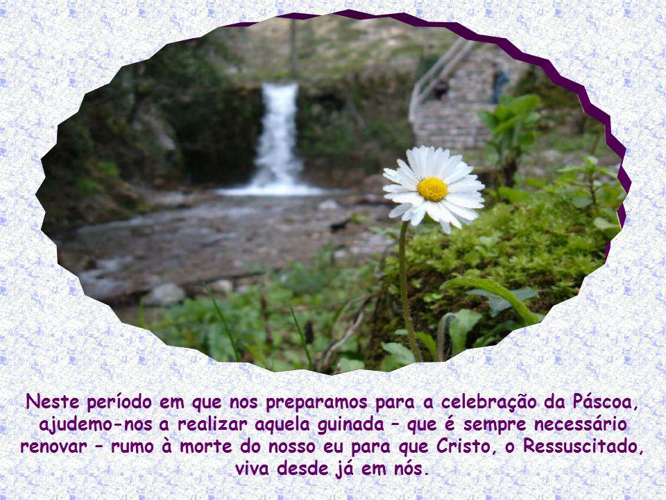 Eu sou a ressurreição e a vida (Jo 11,25).