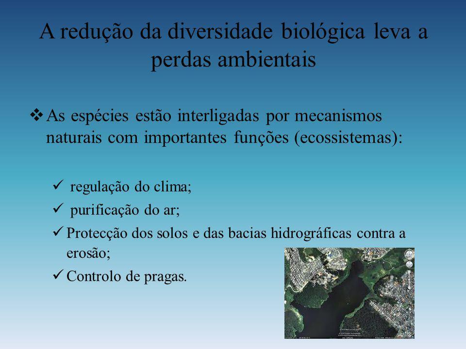 A redução da diversidade biológica leva a perdas ambientais A s espécies estão interligadas por mecanismos naturais com importantes funções (ecossiste