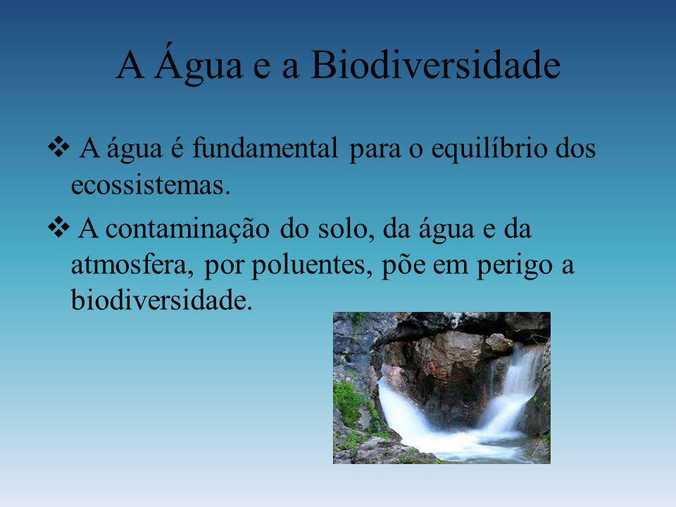 A Água e a Biodiversidade A água é fundamental para o equilíbrio dos ecossistemas. A contaminação do solo, da água e da atmosfera, por poluentes, põe