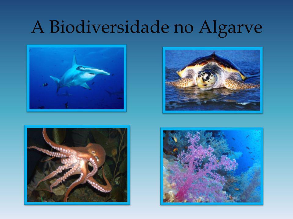 A Biodiversidade no Algarve