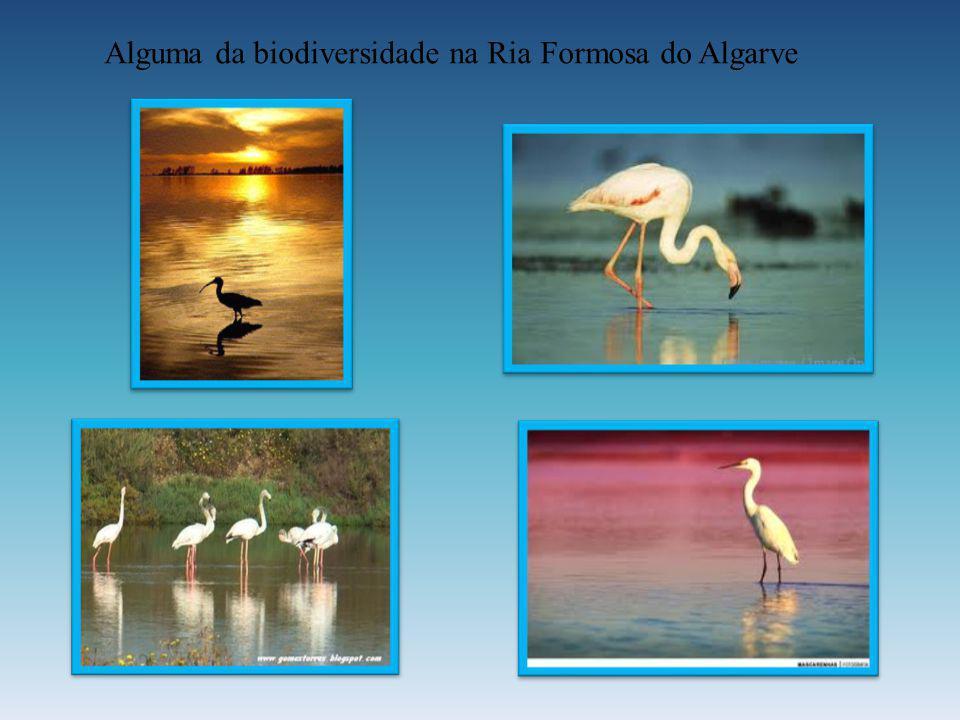 Alguma da biodiversidade na Ria Formosa do Algarve
