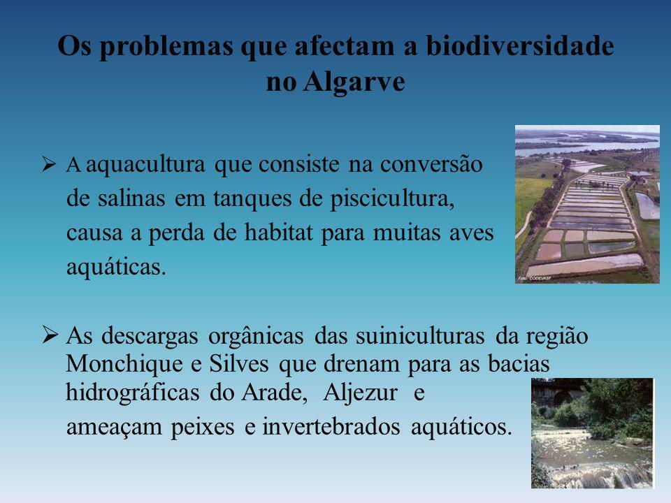Os problemas que afectam a biodiversidade no Algarve A aquacultura que consiste na conversão de salinas em tanques de piscicultura, causa a perda de h