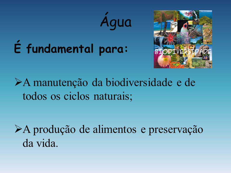 Água É fundamental para: A manutenção da biodiversidade e de todos os ciclos naturais; A produção de alimentos e preservação da vida.