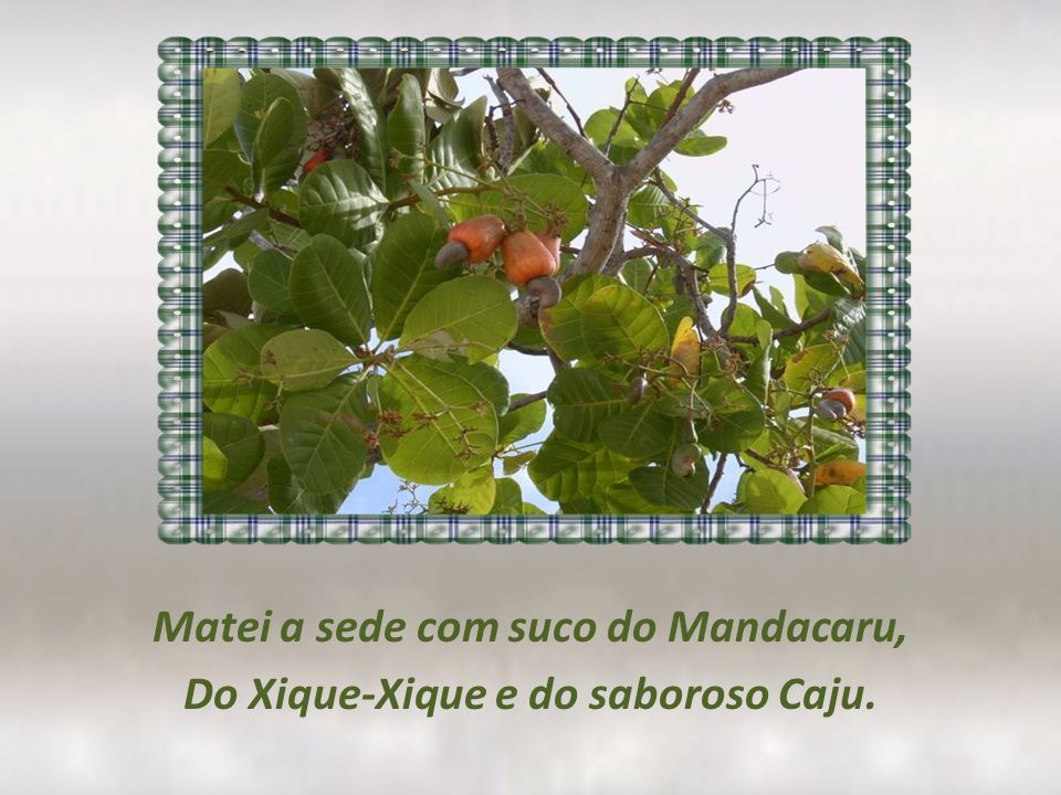 Matei a sede com suco do Mandacaru, Do Xique-Xique e do saboroso Caju.