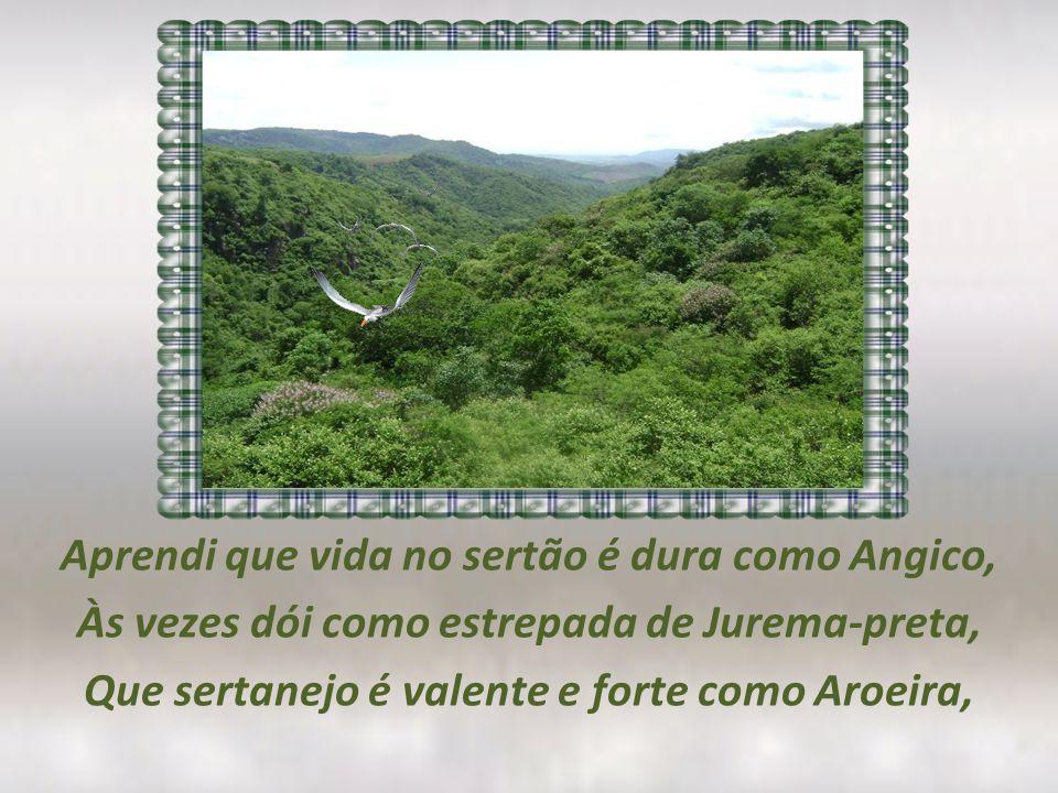 Aprendi que vida no sertão é dura como Angico, Às vezes dói como estrepada de Jurema-preta, Que sertanejo é valente e forte como Aroeira,