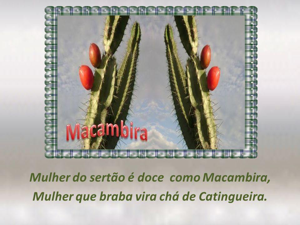 Mulher do sertão é doce como Macambira, Mulher que braba vira chá de Catingueira.