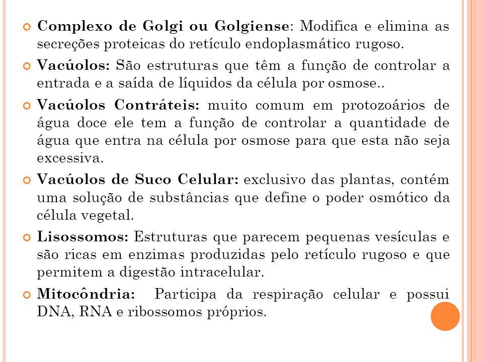 Complexo de Golgi ou Golgiense : Modifica e elimina as secreções proteicas do retículo endoplasmático rugoso. Vacúolos: São estruturas que têm a funçã