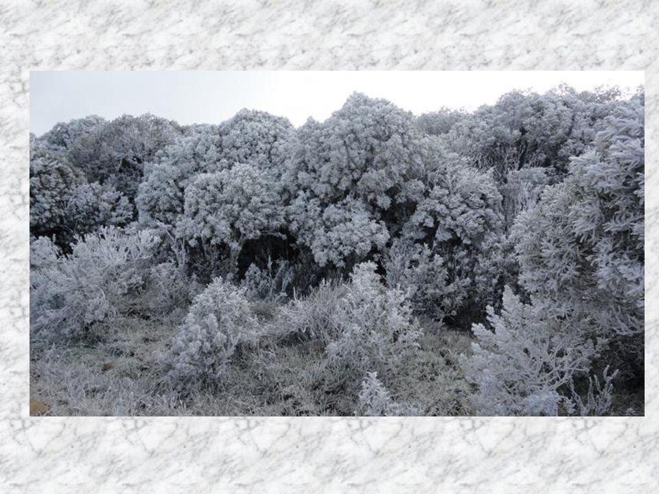 O sincelo, bastante raro no Brasil, é confundido com a neve. É o congelamento das gotas de água assim que elas entram em contato com a superfície