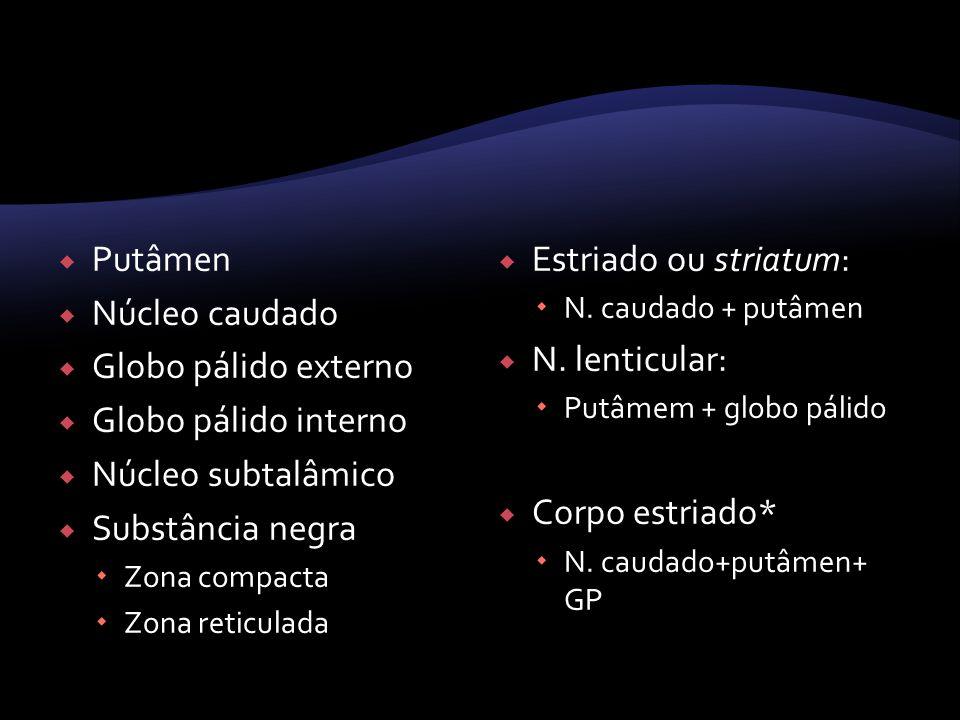 Putâmen Núcleo caudado Globo pálido externo Globo pálido interno Núcleo subtalâmico Substância negra Zona compacta Zona reticulada Estriado ou striatu