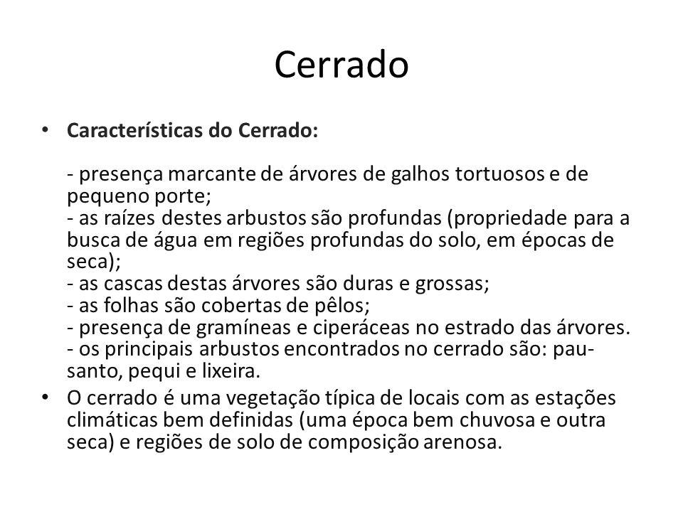 Cerrado Características do Cerrado: - presença marcante de árvores de galhos tortuosos e de pequeno porte; - as raízes destes arbustos são profundas (