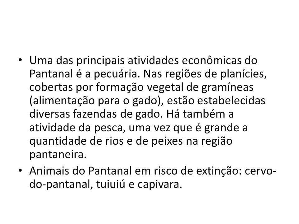 Uma das principais atividades econômicas do Pantanal é a pecuária. Nas regiões de planícies, cobertas por formação vegetal de gramíneas (alimentação p