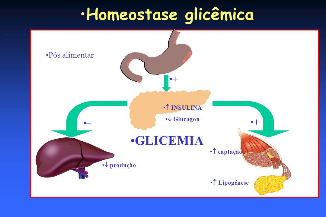 O QUE ACONTECE QUANDO COMEMOS captação produção + – INSULINA Glucagon + Homeostase glicêmica Pós alimentar Lipogênese GLICEMIA