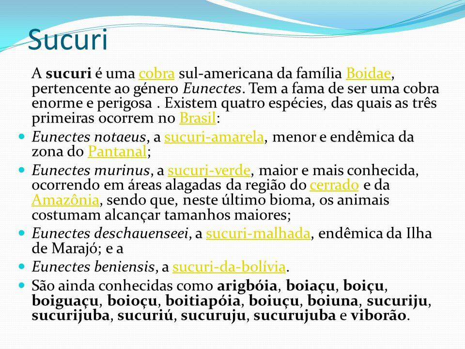 Sucuri A sucuri é uma cobra sul-americana da família Boidae, pertencente ao género Eunectes. Tem a fama de ser uma cobra enorme e perigosa. Existem qu