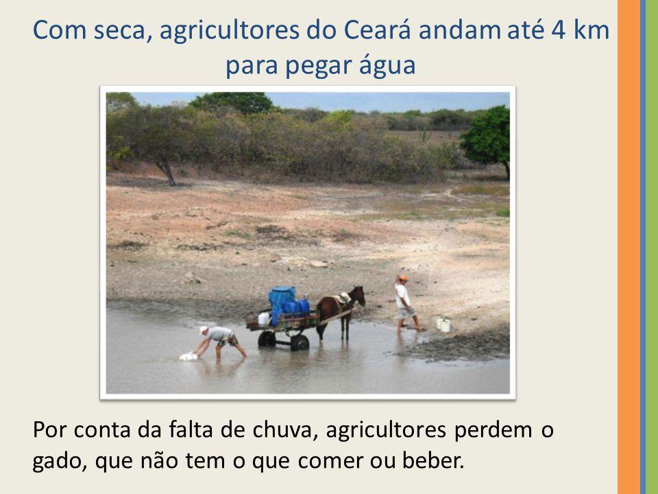 Com seca, agricultores do Ceará andam até 4 km para pegar água Por conta da falta de chuva, agricultores perdem o gado, que não tem o que comer ou beb
