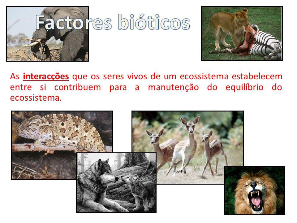 A predação, por mais estranho que pareça, acaba por beneficiar as populações predadas porque os predadores, geralmente, caçam os animais mais frágeis ou doentes, impedindo, deste modo, que as doenças se propaguem.