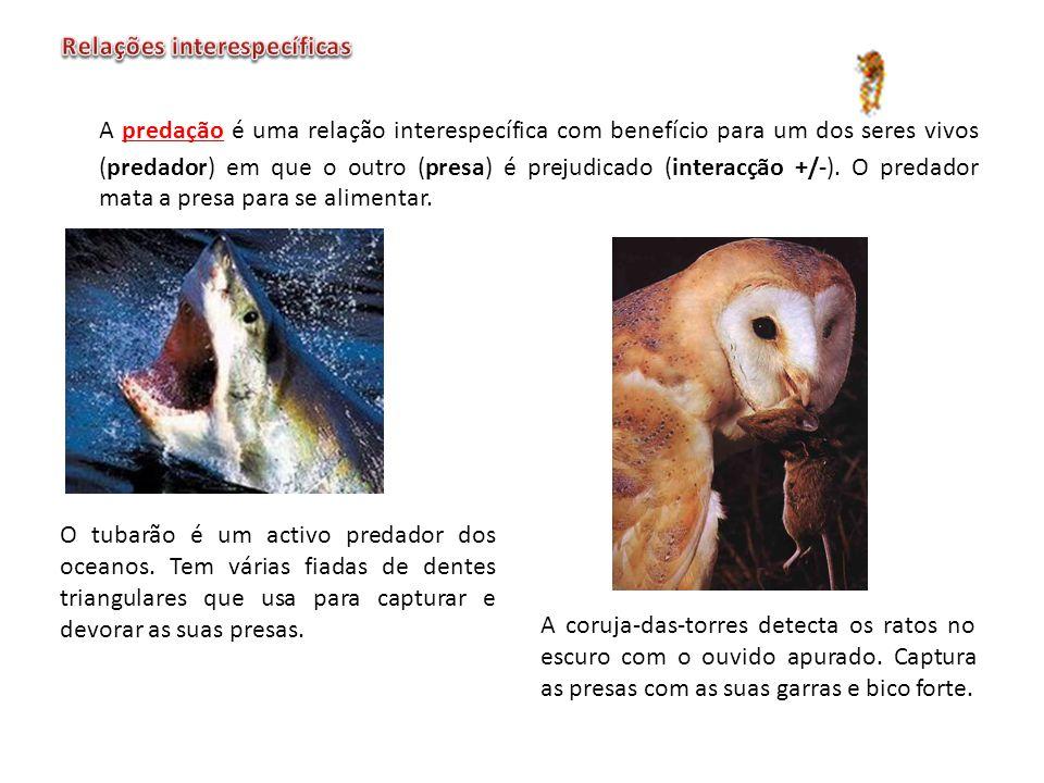 A predação é uma relação interespecífica com benefício para um dos seres vivos (predador) em que o outro (presa) é prejudicado (interacção +/-). O pre