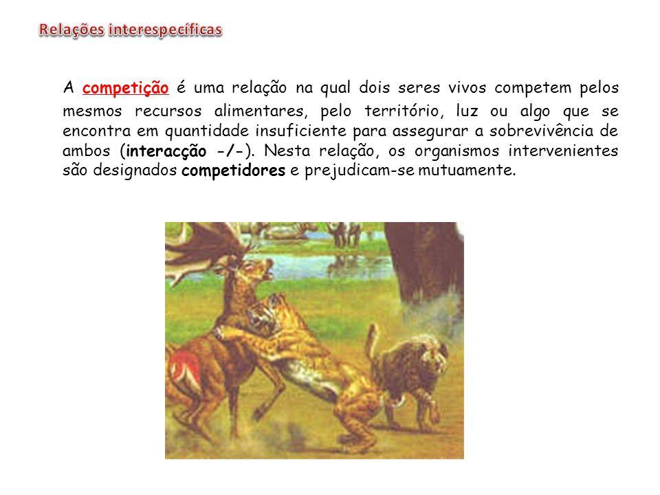 A competição é uma relação na qual dois seres vivos competem pelos mesmos recursos alimentares, pelo território, luz ou algo que se encontra em quanti