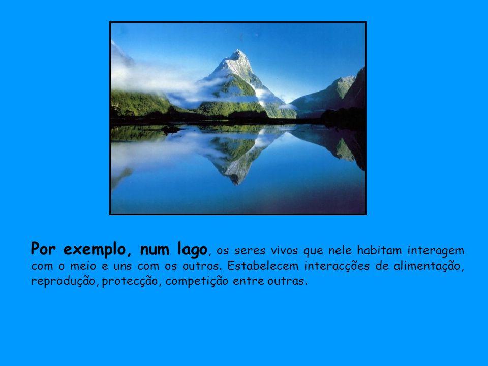 Por exemplo, num lago, os seres vivos que nele habitam interagem com o meio e uns com os outros. Estabelecem interacções de alimentação, reprodução, p