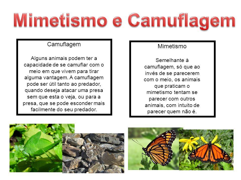 Camuflagem Alguns animais podem ter a capacidade de se camuflar com o meio em que vivem para tirar alguma vantagem. A camuflagem pode ser útil tanto a