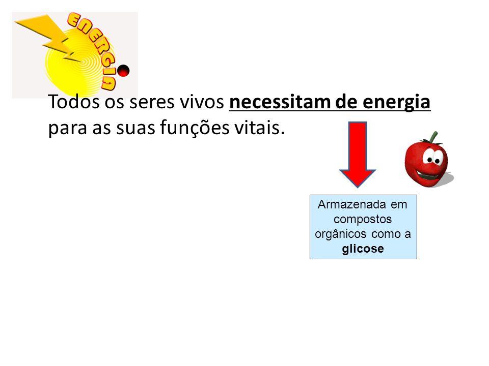 Todos os seres vivos necessitam de energia para as suas funções vitais. Armazenada em compostos orgânicos como a glicose