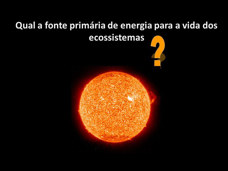 Qual a fonte primária de energia para a vida dos ecossistemas