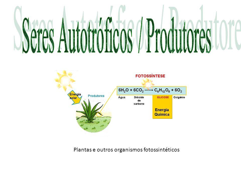 Plantas e outros organismos fotossintéticos
