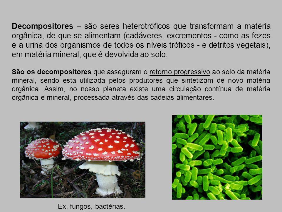 Decompositores – são seres heterotróficos que transformam a matéria orgânica, de que se alimentam (cadáveres, excrementos - como as fezes e a urina do