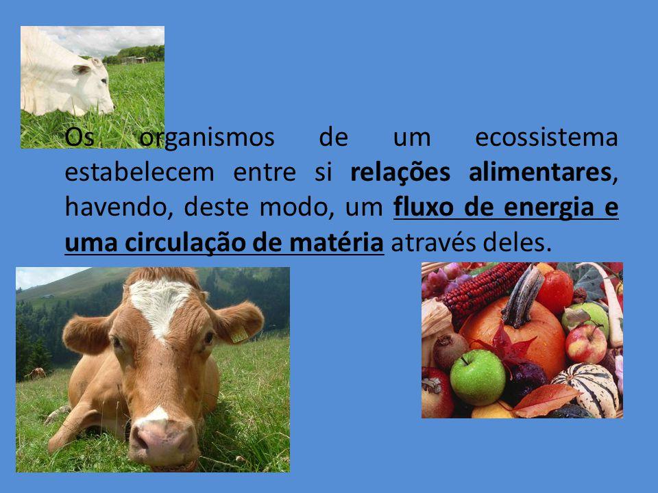 Os organismos de um ecossistema estabelecem entre si relações alimentares, havendo, deste modo, um fluxo de energia e uma circulação de matéria atravé