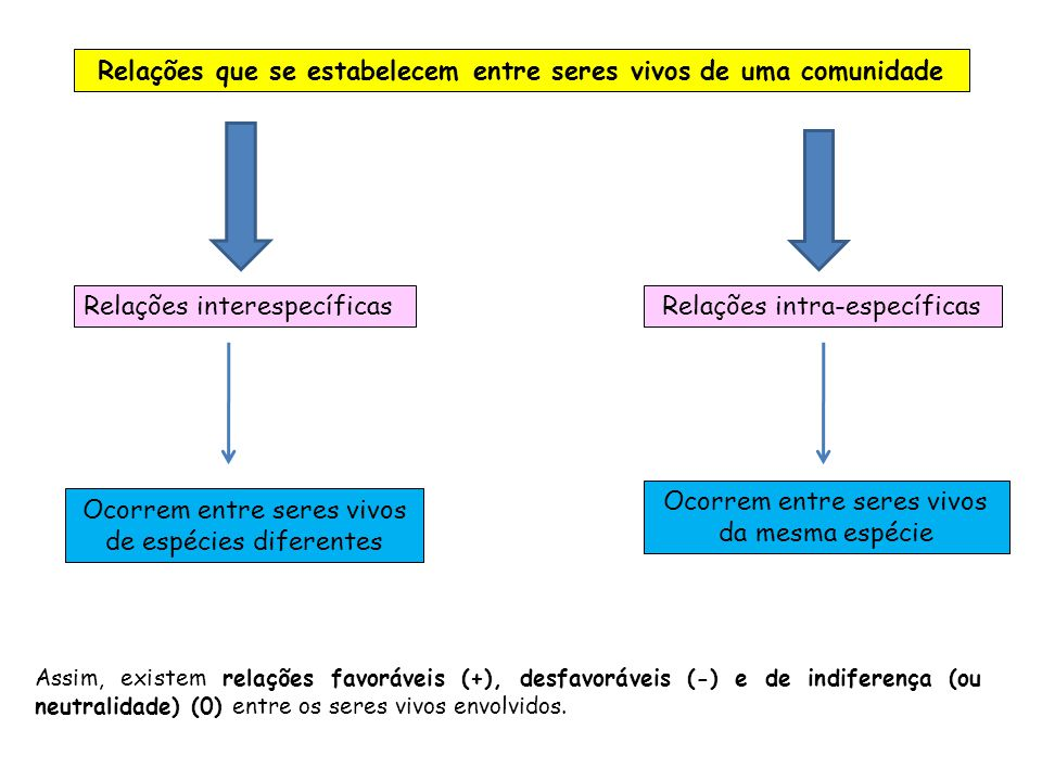 Relações que se estabelecem entre seres vivos de uma comunidade Relações interespecíficasRelações intra-específicas Ocorrem entre seres vivos de espéc