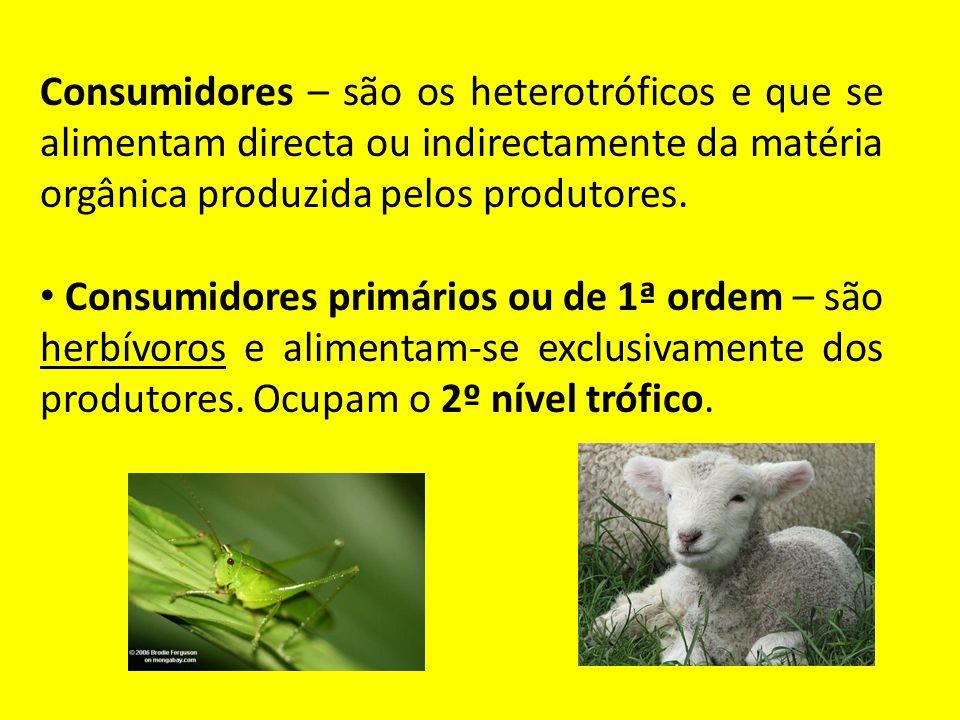 Consumidores – são os heterotróficos e que se alimentam directa ou indirectamente da matéria orgânica produzida pelos produtores. Consumidores primári