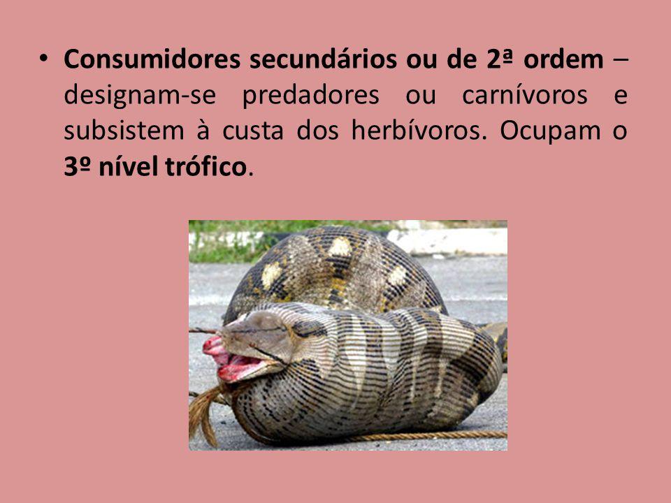 Consumidores secundários ou de 2ª ordem – designam-se predadores ou carnívoros e subsistem à custa dos herbívoros. Ocupam o 3º nível trófico.
