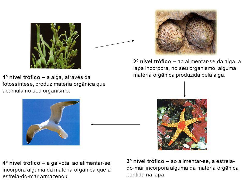 1º nível trófico – a alga, através da fotossíntese, produz matéria orgânica que acumula no seu organismo. 2º nível trófico – ao alimentar-se da alga,