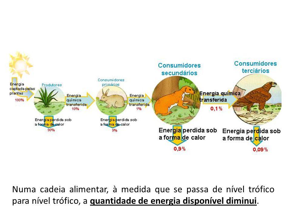 Numa cadeia alimentar, à medida que se passa de nível trófico para nível trófico, a quantidade de energia disponível diminui.