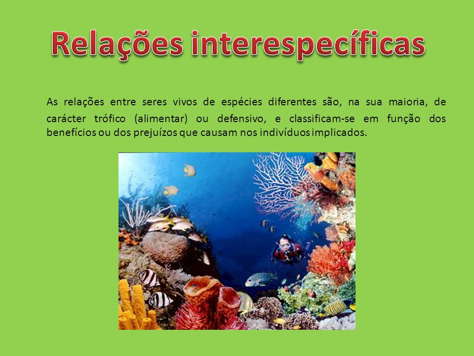 As relações entre seres vivos de espécies diferentes são, na sua maioria, de carácter trófico (alimentar) ou defensivo, e classificam-se em função dos