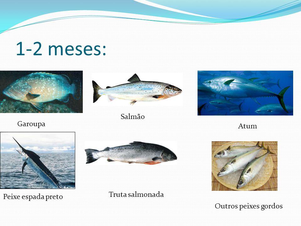 1-2 meses: Garoupa Salmão Atum Peixe espada preto Truta salmonada Outros peixes gordos