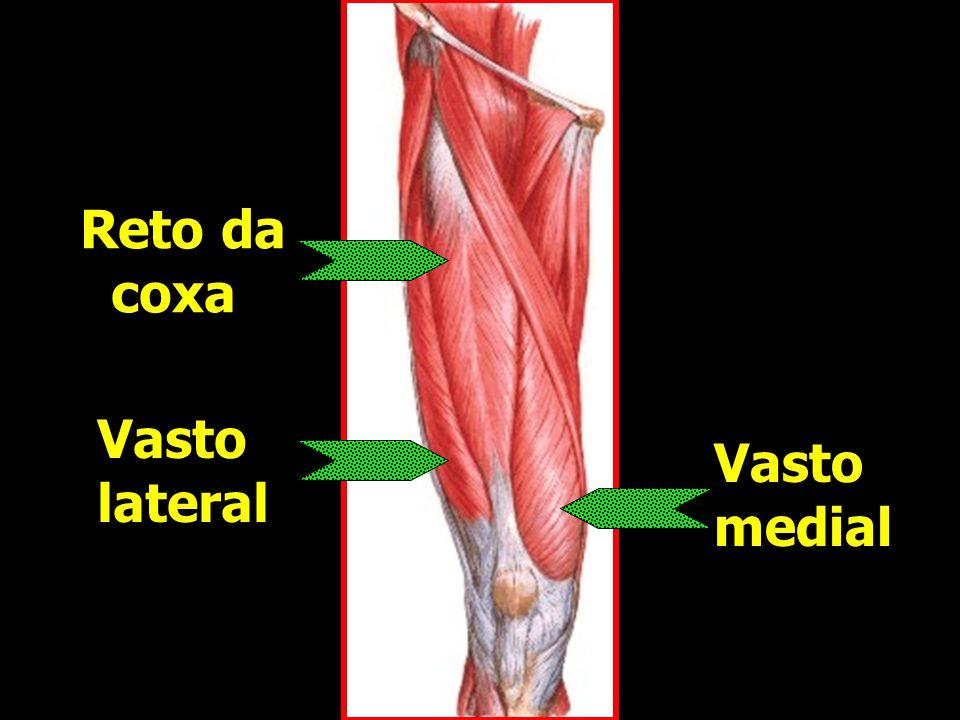 Reto da coxa Reto da coxa Vasto lateral Vasto lateral Vasto medial Vasto medial