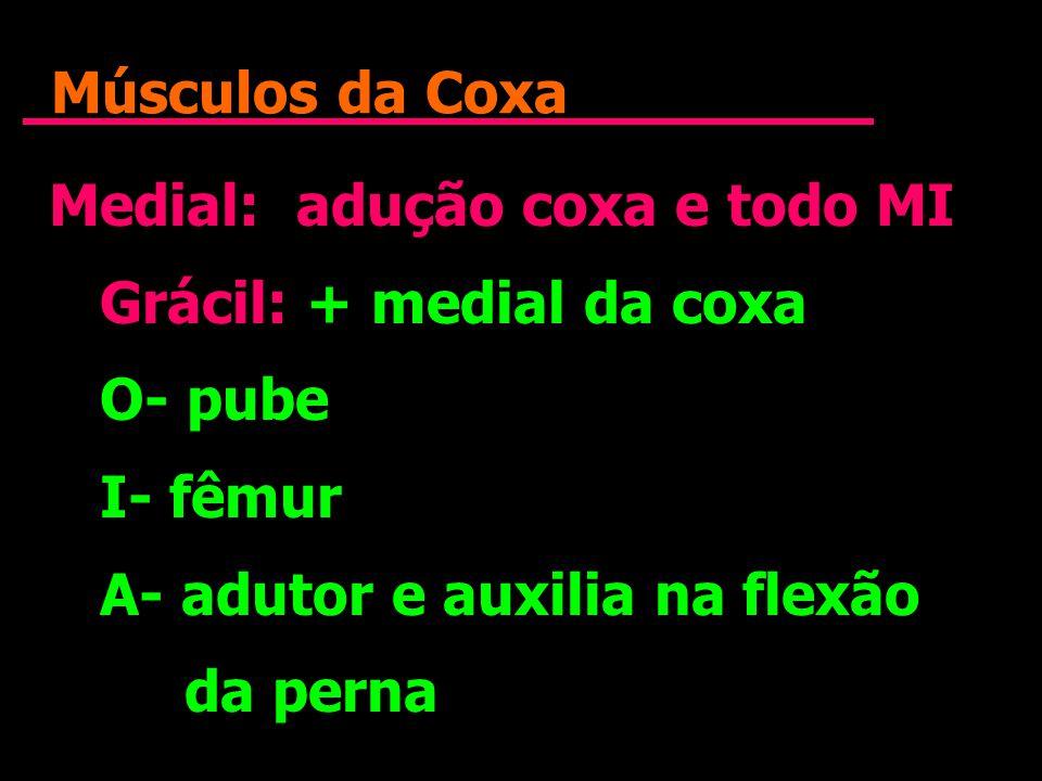 Músculos da Coxa Medial: adução coxa e todo MI Grácil: + medial da coxa O- pube I- fêmur A- adutor e auxilia na flexão da perna Medial: adução coxa e