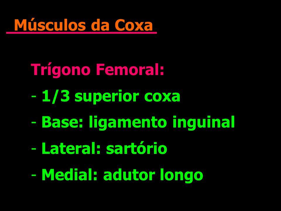 Músculos da Coxa Trígono Femoral: - 1/3 superior coxa - Base: ligamento inguinal - Lateral: sartório - Medial: adutor longo Trígono Femoral: - 1/3 sup