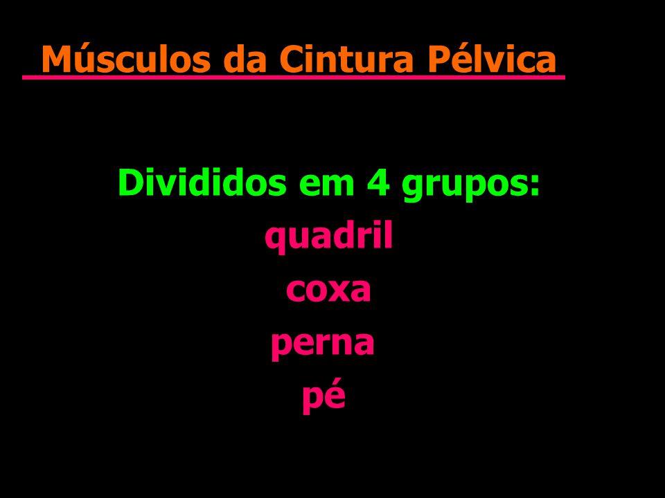 Músculos da Cintura Pélvica Divididos em 4 grupos: quadril coxa perna pé Divididos em 4 grupos: quadril coxa perna pé