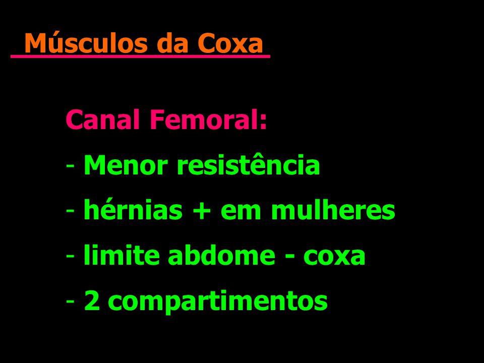 Músculos da Coxa Canal Femoral: - Menor resistência - hérnias + em mulheres - limite abdome - coxa - 2 compartimentos Canal Femoral: - Menor resistênc