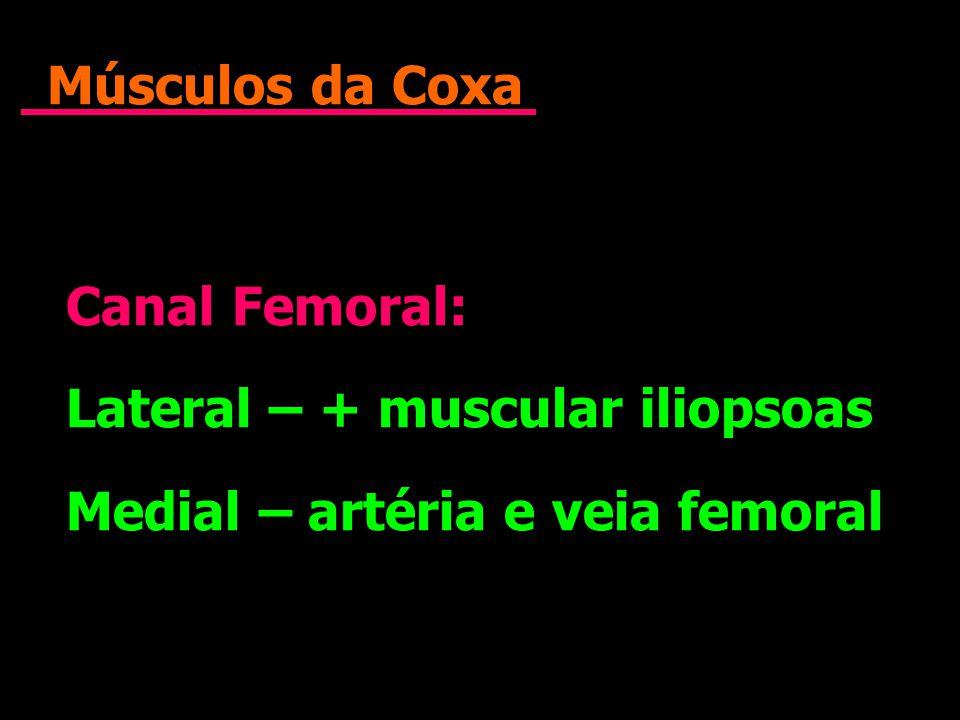 Músculos da Coxa Canal Femoral: Lateral – + muscular iliopsoas Medial – artéria e veia femoral Canal Femoral: Lateral – + muscular iliopsoas Medial –
