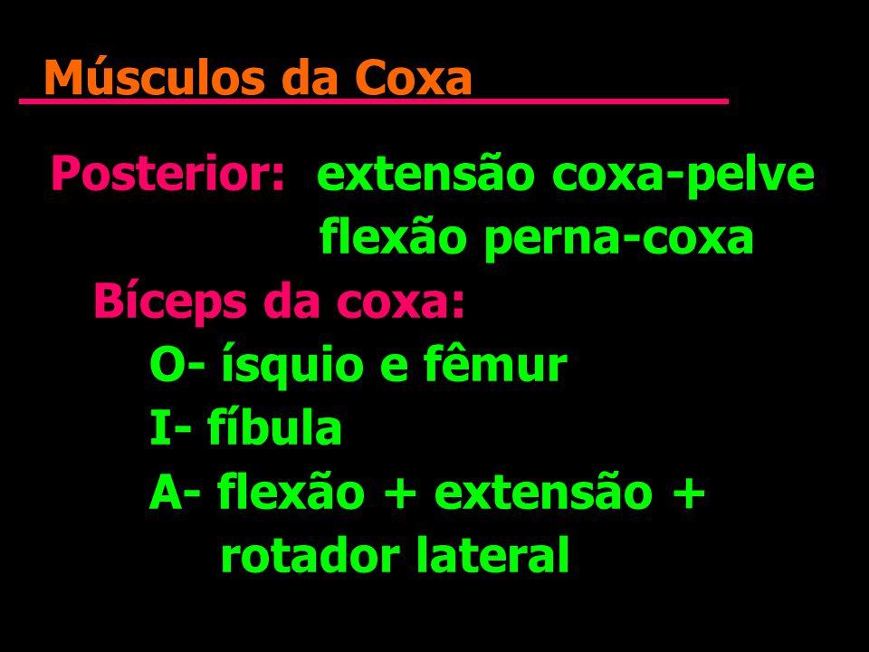 Músculos da Coxa Posterior: extensão coxa-pelve flexão perna-coxa Bíceps da coxa: O- ísquio e fêmur I- fíbula A- flexão + extensão + rotador lateral P