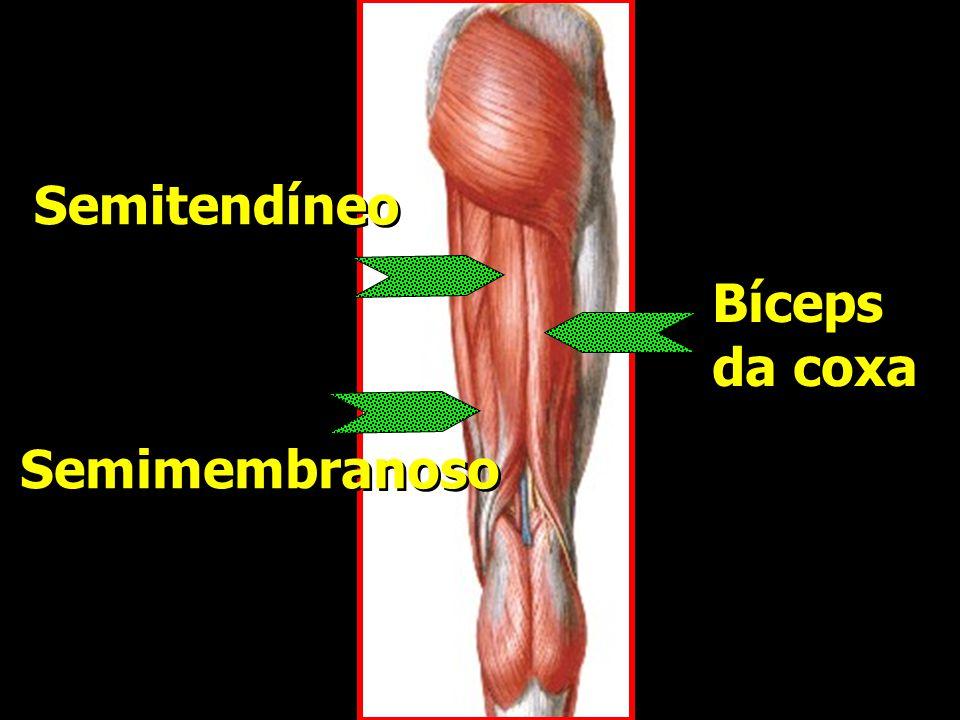 Bíceps da coxa Bíceps da coxa Semitendíneo Semimembranoso
